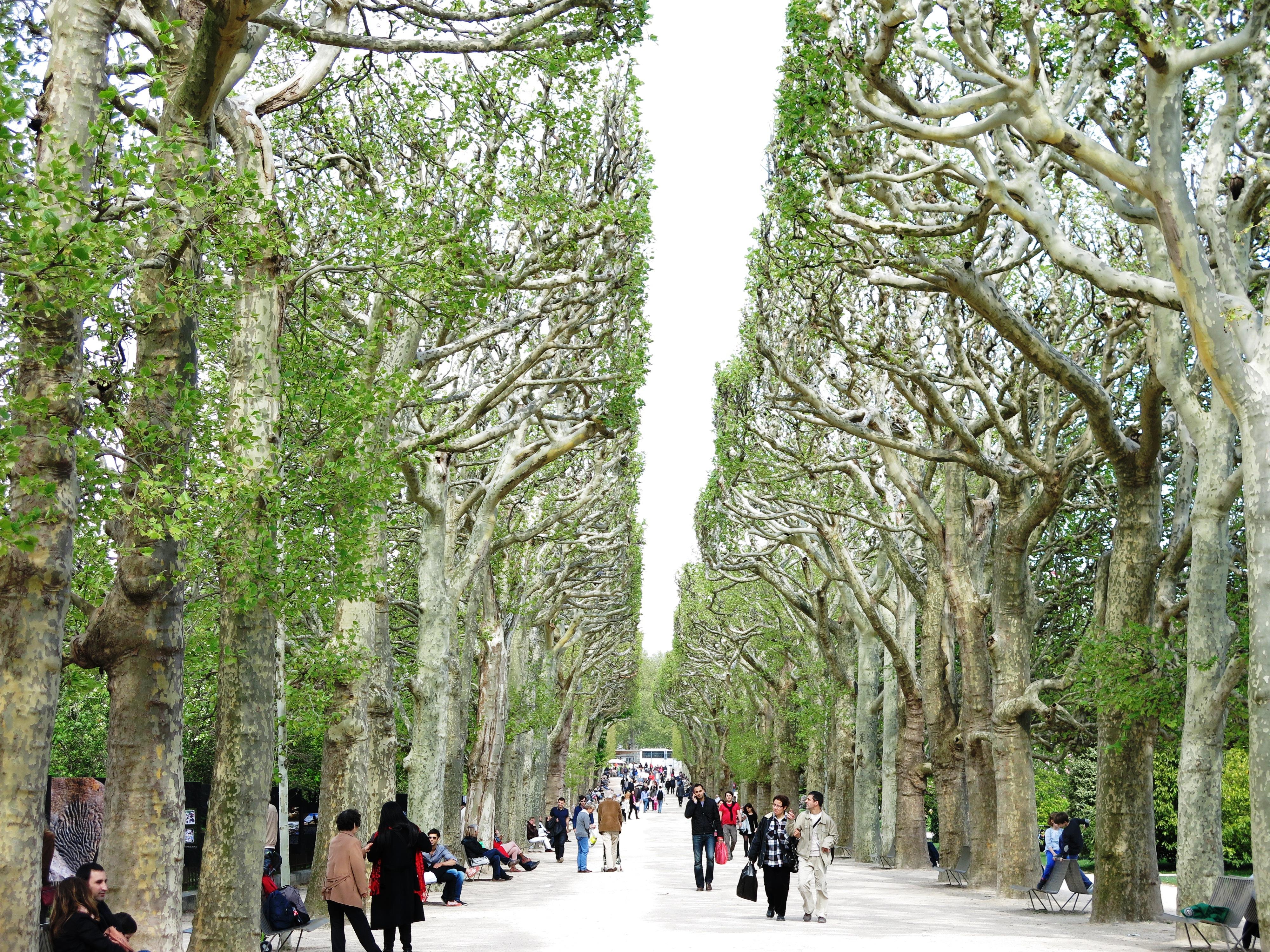 Jardin des plantes vanillanostalgia for Jardin des plantes